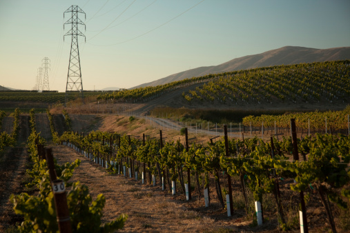 Electricity Pylon「California Vineyard」:スマホ壁紙(11)