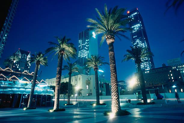 USA, California, Los Angeles, Civic Center, palms in square, night:スマホ壁紙(壁紙.com)