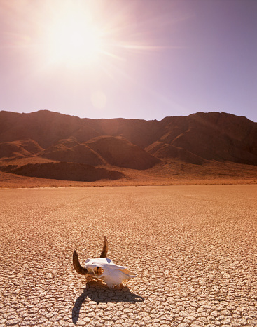 屋外「USA, California, Death Valley, cattle skull on the Racetrack Playa」:スマホ壁紙(12)