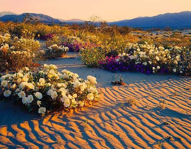 California Desert:スマホ壁紙(壁紙.com)