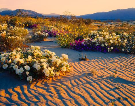 Wilderness Area「California Desert」:スマホ壁紙(17)