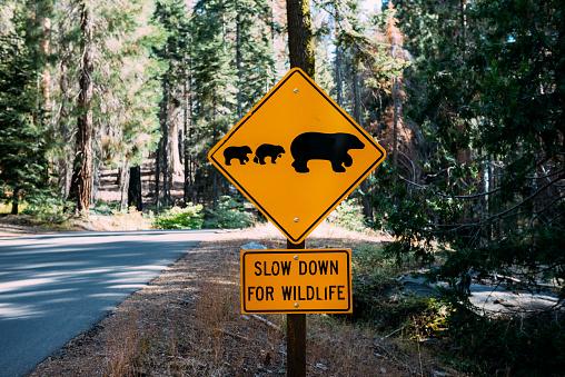 Road Warning Sign「USA, California, Sequoia Natioal Park, Animal Crossing Sign, family of mum and baby bears」:スマホ壁紙(11)