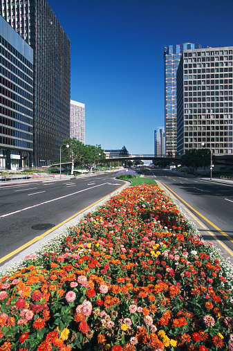 Boulevard「USA, California, Los Angeles, Century City, flowers by road」:スマホ壁紙(17)