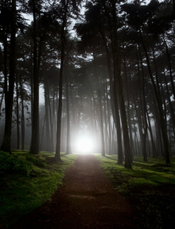 Woodland「USA, California, San Francisco, light shining on footpath in forest」:スマホ壁紙(19)