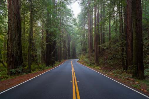 Grove「USA, California, Road in forest」:スマホ壁紙(10)