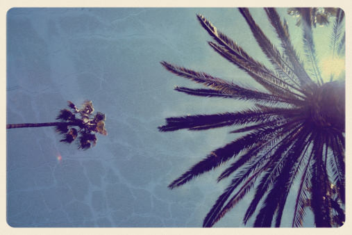 Fan Palm Tree「California Palm Trees - Vintage Postcard」:スマホ壁紙(5)