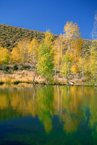 Inyo National Forest「USA, California, Inyo National Forest, Lake in a forest」:スマホ壁紙(18)