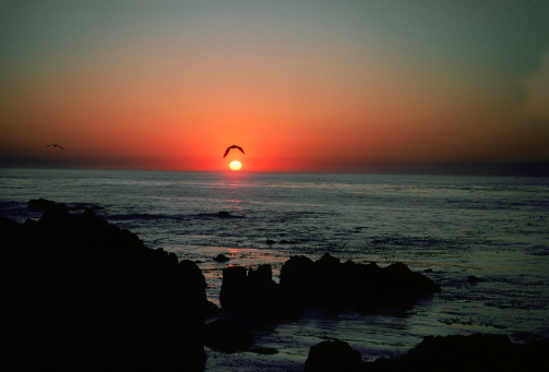 Big Sur「USA, California, Big Sur, Seagull flying over sea during sunset」:スマホ壁紙(0)