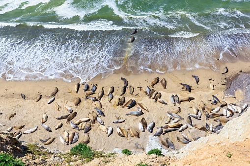 Water's Edge「USA, California, Marin County, Point Reyes National Seashore, View to beach with sea elefants」:スマホ壁紙(7)