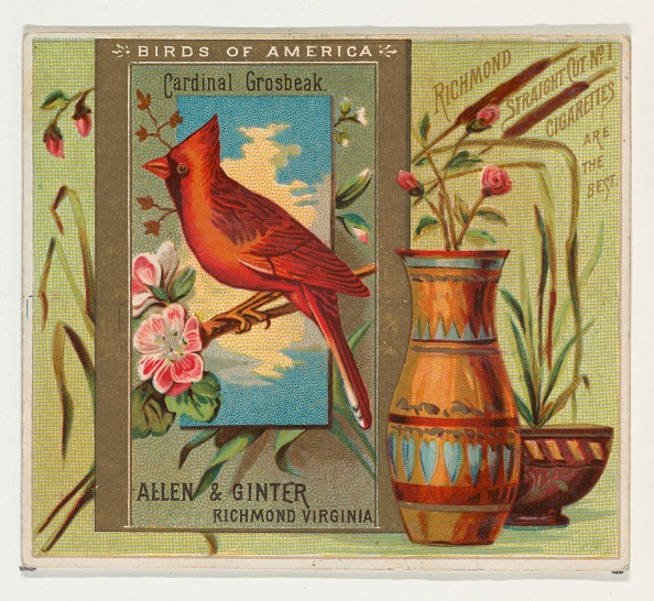 Vase「Cardinal Grosbeak」:写真・画像(1)[壁紙.com]
