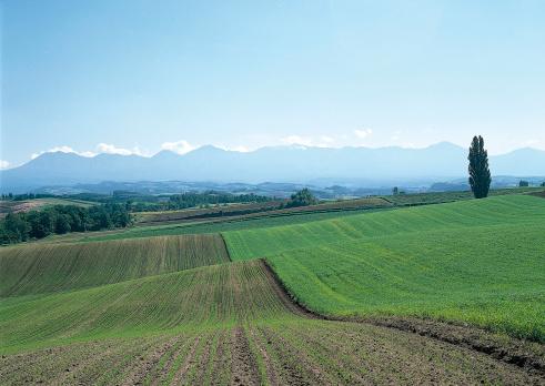 Daisetsuzan Volcanic Group「Autumn Sowing Wheat and Mt. Daisetsu」:スマホ壁紙(15)