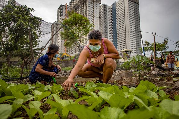 Blank「Filipinos Take To Urban Farming To Combat HIgh Food Prices」:写真・画像(13)[壁紙.com]