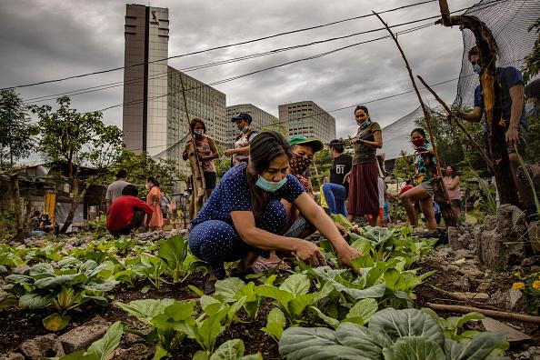Blank「Filipinos Take To Urban Farming To Combat HIgh Food Prices」:写真・画像(17)[壁紙.com]