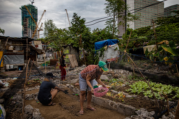 Blank「Filipinos Take To Urban Farming To Combat HIgh Food Prices」:写真・画像(14)[壁紙.com]