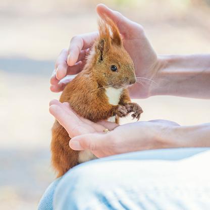 Squirrel「Squirrels in Wildlife」:スマホ壁紙(7)