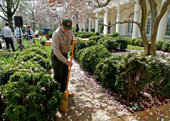 Tree「Bush Honors United States Naval Academy Football Team」:写真・画像(7)[壁紙.com]