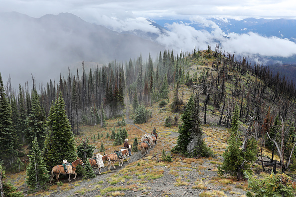 Mountain「Montana Forests Struggle With Climate Change」:写真・画像(19)[壁紙.com]