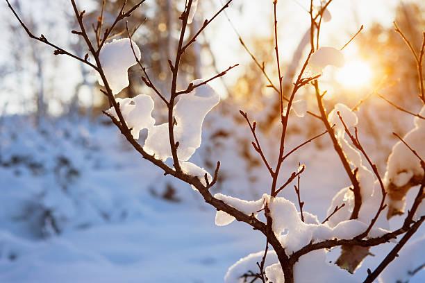 Warm winter sun:スマホ壁紙(壁紙.com)