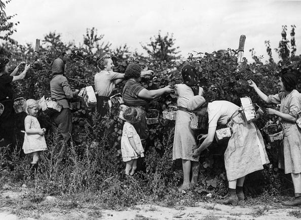 Harvesting「Blackberry Picking」:写真・画像(12)[壁紙.com]