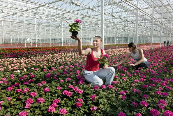 Potted Plant「Maasland, Netherlands」:写真・画像(1)[壁紙.com]