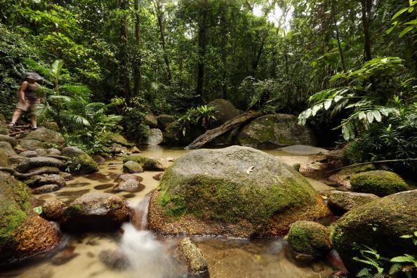 Rainforest「Scenes Of The Cairns Region」:写真・画像(11)[壁紙.com]