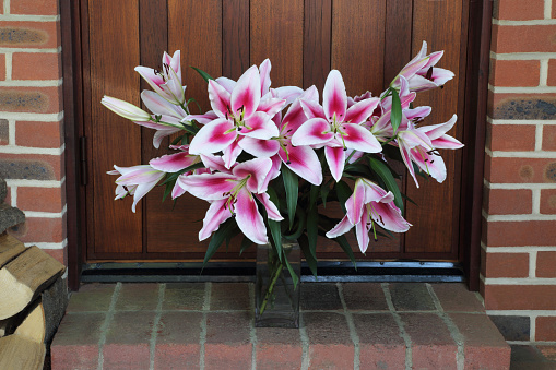 Log「Bunch of stargazer lilies left in vase on doorstep as gift.」:スマホ壁紙(3)