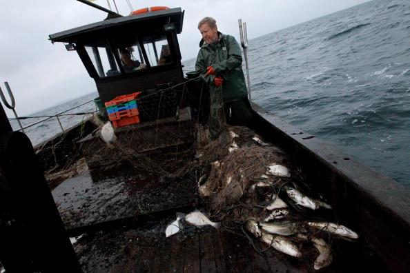 Fisherman「Baltic Sea Fishermen Face Uncertain Future」:写真・画像(5)[壁紙.com]