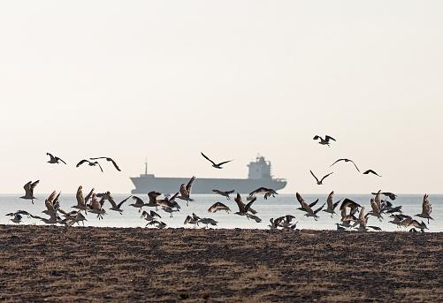 ビーチ「Seabirds and Container Ship」:スマホ壁紙(8)