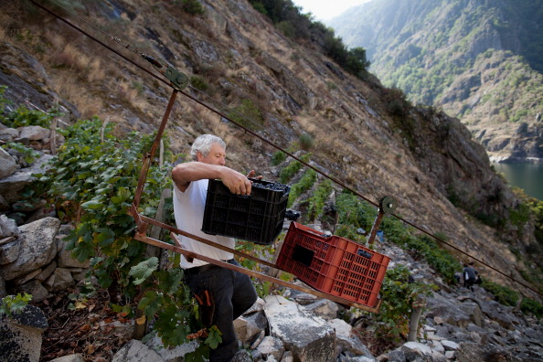 Homemade「The Grape Harvest Is Gathered In On The Slopes Surrounding The Sil River」:写真・画像(13)[壁紙.com]