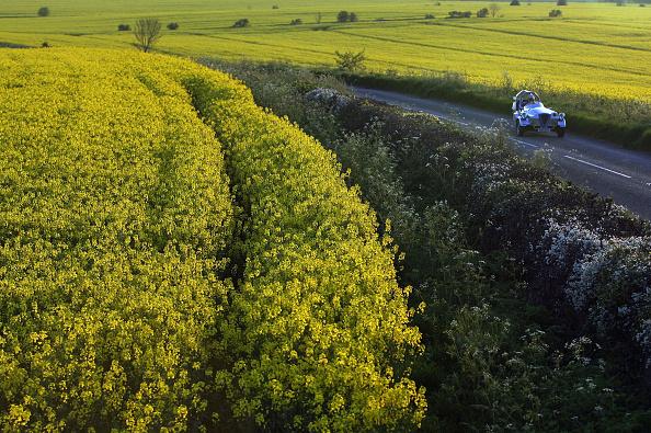 Oilseed Rape「Rapeseed Crops Start To Bloom」:写真・画像(15)[壁紙.com]
