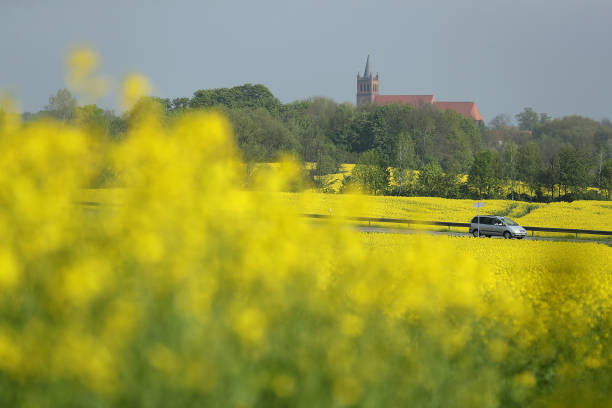 Rapeseed Fields Blossom In Brandenburg:ニュース(壁紙.com)