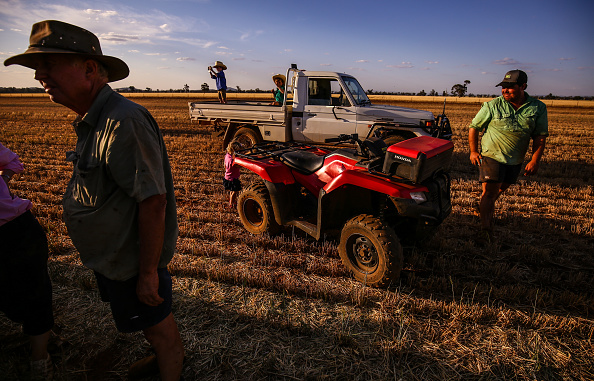 Wheat「Wheat Farmers Forced To Make Hay Following  Crop Failure Due To Drought」:写真・画像(12)[壁紙.com]