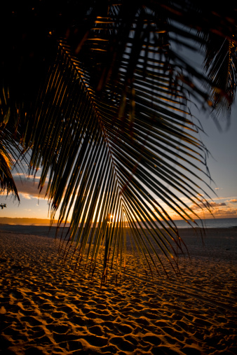 Waimea Bay「Palm leaf hanging down in front of sunset on beach.」:スマホ壁紙(17)