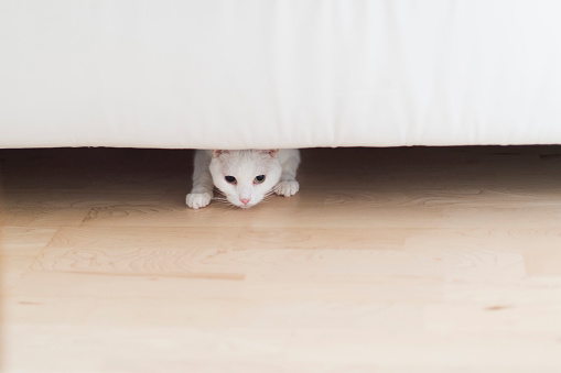 Crouching「White cat crouching under the couch at home」:スマホ壁紙(12)