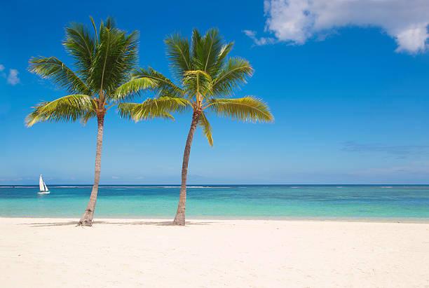 Palms on Mauritius:スマホ壁紙(壁紙.com)