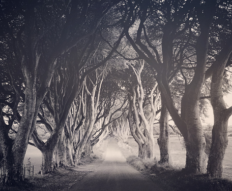 Avenue「Mystical Dark Hedges Northern Ireland」:スマホ壁紙(3)