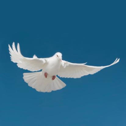 Animal Wing「Bird」:スマホ壁紙(17)