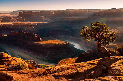 Single Tree「Dead Horse Point over Colorado River and Canyonlands at sunset – Utah, USA」:スマホ壁紙(5)
