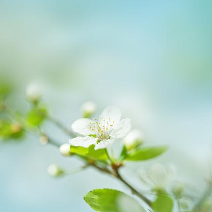 イースター「梅の花」:スマホ壁紙(12)