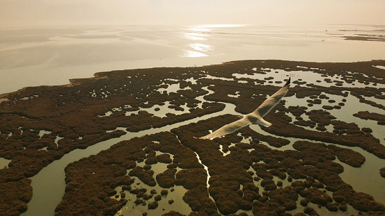 The Nature Conservancy「Seagull and Aerial View of Wetland」:スマホ壁紙(15)