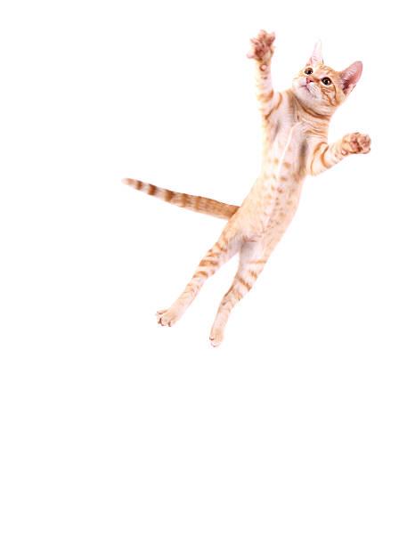 Cat Jumping:スマホ壁紙(壁紙.com)