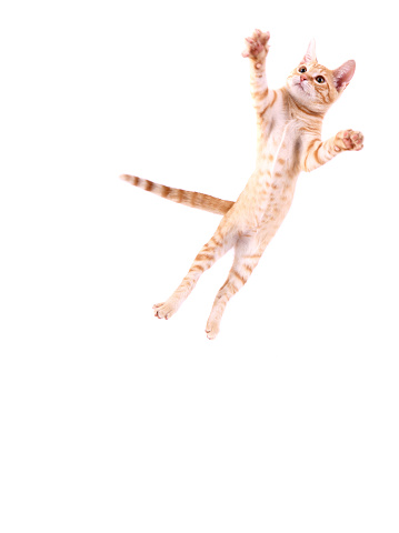 Animal Themes「Cat Jumping」:スマホ壁紙(5)