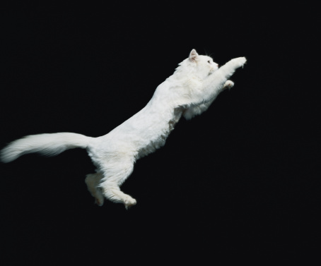 1980-1989「Cat jumping in air」:スマホ壁紙(14)