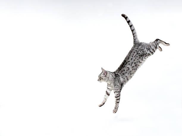 Cat jumping down on white:スマホ壁紙(壁紙.com)