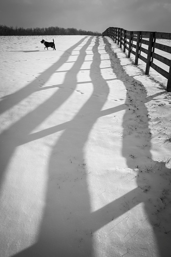 Dog「Shadow of fence in snow and dog, Johnstown, Ohio, USA」:スマホ壁紙(7)