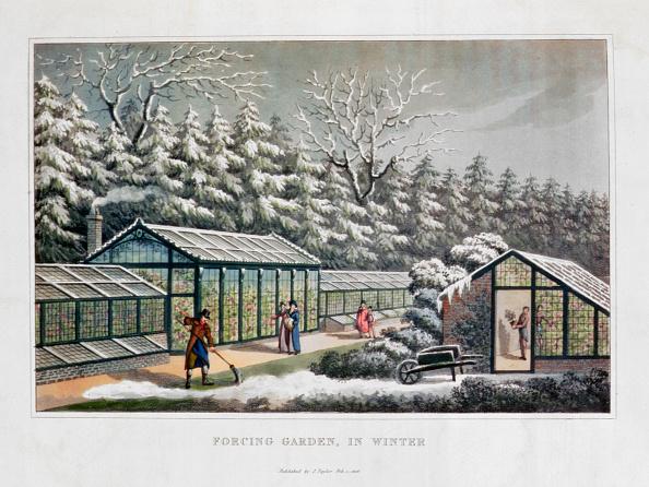 Greenhouse「Forcing Garden In Winter' 1816」:写真・画像(18)[壁紙.com]
