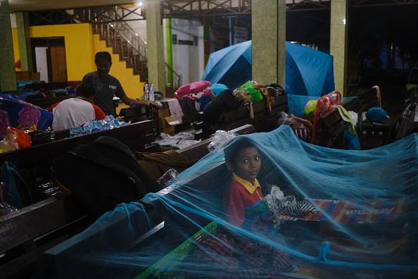 動物「Flash Floods Hit Indonesia's Papua Province」:写真・画像(8)[壁紙.com]