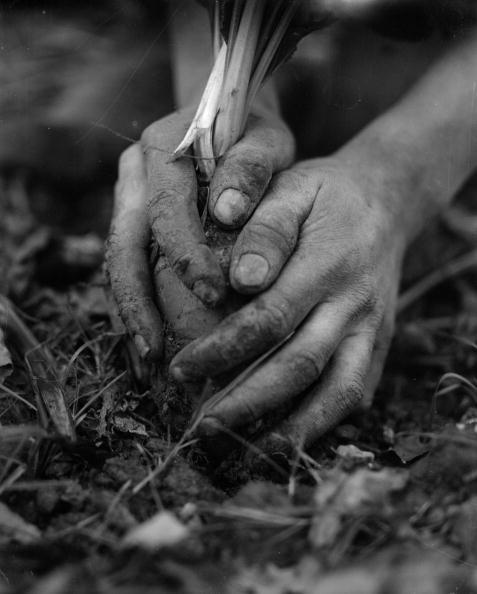 Light Bulb「Bulb Planting」:写真・画像(18)[壁紙.com]