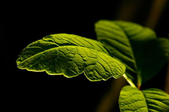Plant「Historic Trust Releases List Of Most Endangered US Places」:写真・画像(16)[壁紙.com]