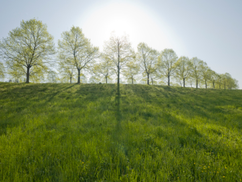 Piedmont - Italy「Sun rises over green meadow in early spring」:スマホ壁紙(4)